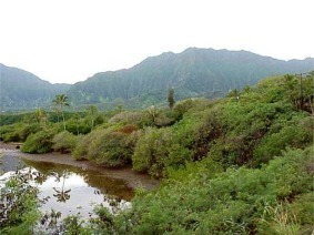 Heeia Kea Looking Mauka toward Koolau Mountains, Kaneohe, Oahu, Hawaii picture taken by ATAH.NET photographer for www.digital-picture-gallery.com